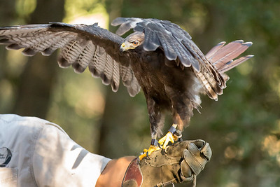 Raptor Rescue Presentation at Cuyamaca Rancho State Park