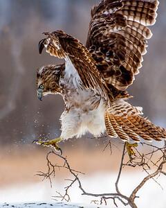 Precarious Landing...