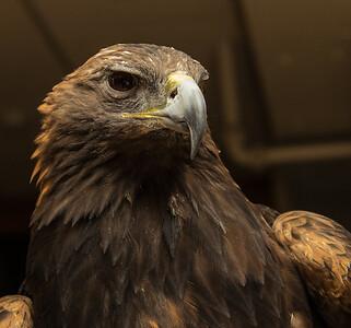 Delaware Raptor Center Raptors @ Woodloch Pines