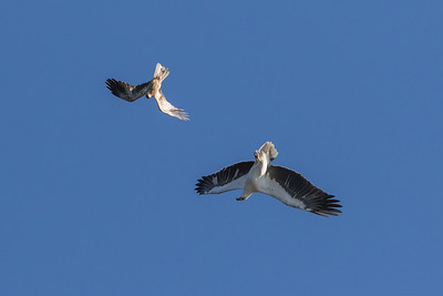 Sea-Eagle-fight-sequence--0169