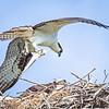 nest bird with fish-2