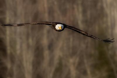 Perfect glide