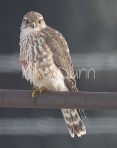 Merlin-10