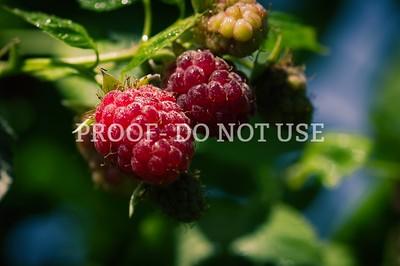 Raspberries 20027