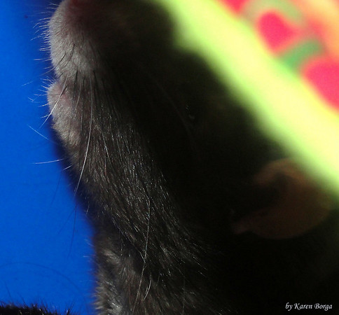 Whiskers in the shadows.