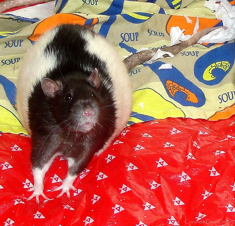 Jerry, overweight, current CEO of Rattie Weight Watchers