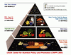 If you are viewing this in the keywords gallery, click the link below and visit the gallery to view embedded YouTube videos with examples of how to feed pet rats medicine foods. This is the now outdated Food Pyramid from the USDA.