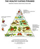 If you are viewing this in the keywords gallery, click the link below and visit the gallery to view embedded YouTube videos with examples of how to feed pet rats medicine foods. This is a modern human Food Pyramid from the Department of Nutrition, Harvard School of Public Health. This is not a formal rat diet, but suggestions for food types. RATS SHOULD NOT DRINK ALCOHOL. DAILY VITAMIN SUPPLEMENTS ARE NOT RECOMMENDED FOR PET RATS.