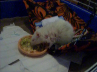 5/14/2012 video - - Ms. Eme is much improved after eight days of prednisone two times a day. Her food is minced. Eme has a new mass on her right side, middle area in addition to a mass on the right side of her back.