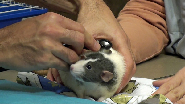<p>Dr. Anthony Pilny, located in the New York metropolitan area, gives a basic exam to  healthy volunteer Karen Rat.</p>