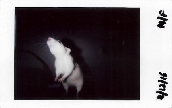 Instax Rats