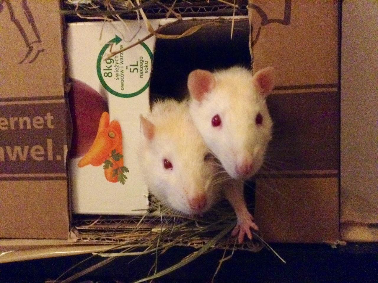 Gozno to ten bliżej marchewek, Jimmy zawsze żwawszy jak kalafior dziś :)