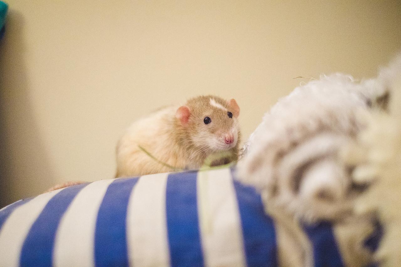 Lubię każdy rodzaj poduszki i dywanika