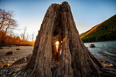 Ancient Hollow Stump Sunset Inside Rattlesnake Lake 1-13-19
