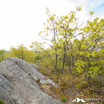 Rattlesnake Mountain 13