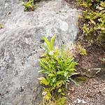 Rattlesnake Mountain 16