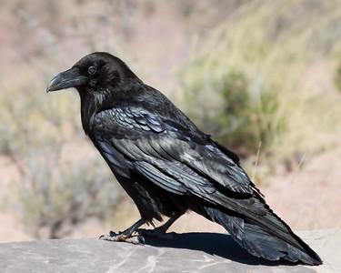 Spoke the Raven...