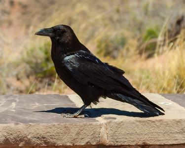 Raven Raven