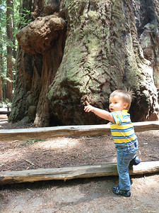 Big trees and Carter.