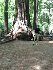 Carter and the giant tree