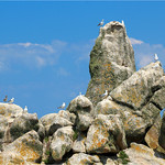 Nesting area  -  Rocks  - Island of Sein*