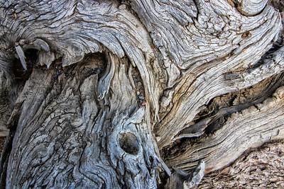 Barkscape: Whitebark Pine #2 | Caribou-Targhee National Forest