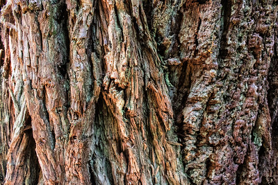 Barkscape: Redwood Tree #2 | Redwood National and State Park