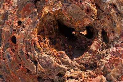 Forest Portrait: Two Eyes, Petrified Tree | Petrified Forest National Park