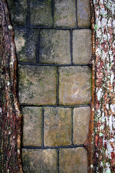 I'm not sure why, but back in the 1700's they used to fill split trees with bricks.  Nonetheless, it looked really cool.