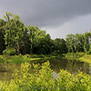 Bright greens after a rainstorm in Coosaw Point.  Little did I know there was a gator just in front of me in the water.
