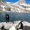 Our loyal hiking partners for the day... they don't mind swimming in 40-degree water.