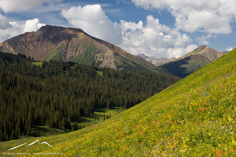 The mountain-sides were virtual carpets of wildflowers.
