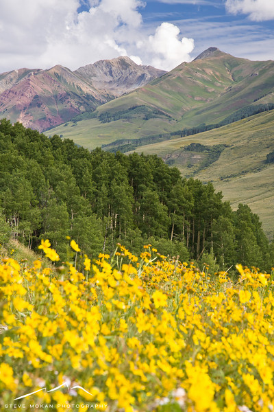 This shot has it all- wildflowers, aspens, and tall mountains.