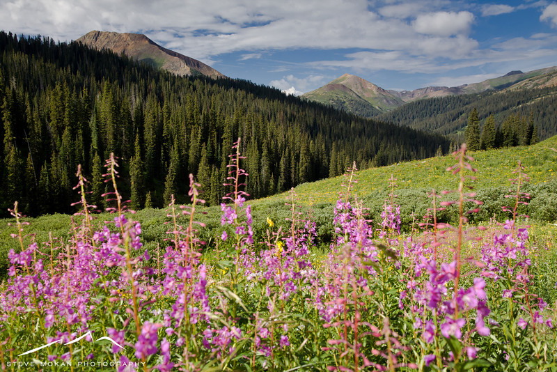 IMAGE: http://www.stevemokanphotography.com/Re/Crested-Butte-Summer-Trip-Aug/i-bcS2Cp8/0/L/CrestedButteAugust-4-L.jpg