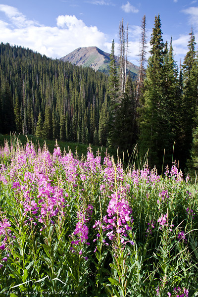 On the hike to Hasley Pass, the lupines were everywhere.