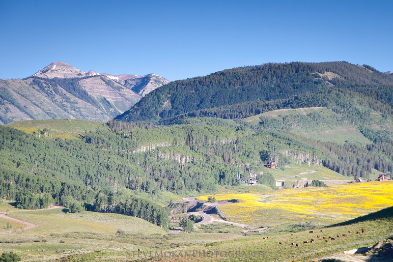 A patch of wildflowers blankets the hillside, while a herd of cows grazes nearby.