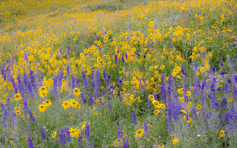 The mountainsides were carpeted with yellow and purple everywhere we went.