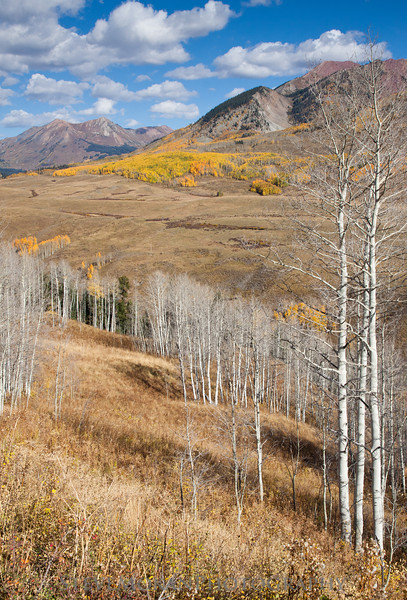 A handful of bare aspens framed the scene perfectly.