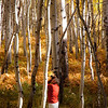 Dad in action among the short and tall aspens.