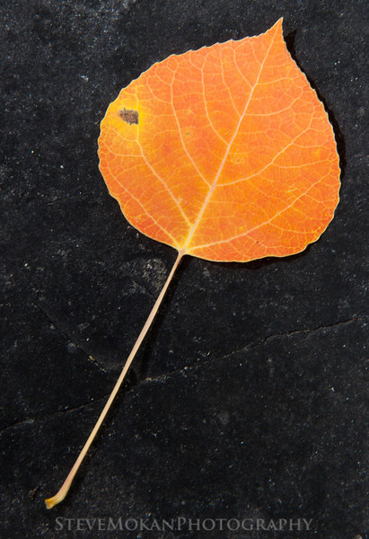 A solitary orange aspen leaf on a coal-black rock along the trail.