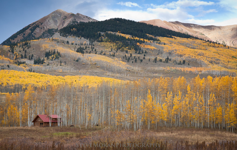A small cabin near Gothic, CO that's used for seasonal visitors and researchers.  A couple cows decided to move in for the fall.