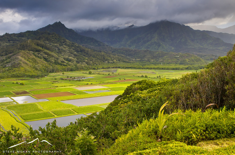 The view from the famous Hanalei overlook is famous with the taro fields below and the mountains behind.