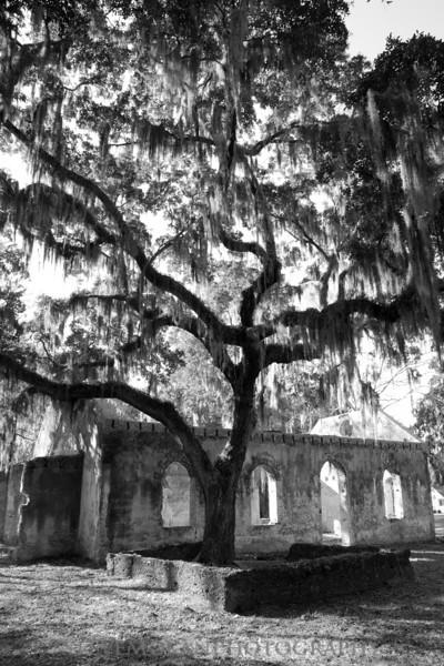 An old oak tree towers over the Chapel of Ease on St. Helena Island.