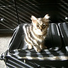 Shadow, Getting ready to travel<br /> <br /> Photographer's Name: Candy Olson<br /> Photographer's City and State: Portland, OR