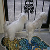 Watching for Mommy to come home<br /> <br /> Photographer's Name: Rosemary Moyes<br /> Photographer's City and State: Clarksville, IN