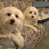 my babies<br /> <br /> Photographer's Name: Rosemary Moyes<br /> Photographer's City and State: Clarksville, IN