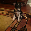 Little Sasha<br /> <br /> Photographer's Name: Tara Richey<br /> Photographer's City and State: Jeffersonville, IN