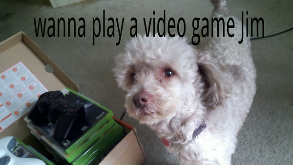 Chip loves my video games !<br /> <br /> Photographer's Name: James  Smith<br /> Photographer's City and State: Sellersburg, IN