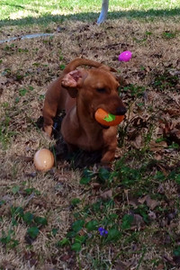 Easter egg hunter  Photographer's Name: Tammy Sandlin Photographer's City and State: Louisville , KY