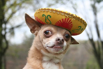 Señor Goosie is de top dog in de whole widey world!  Photographer's Name: Dorothy Newkirk Photographer's City and State: New Albany, IN